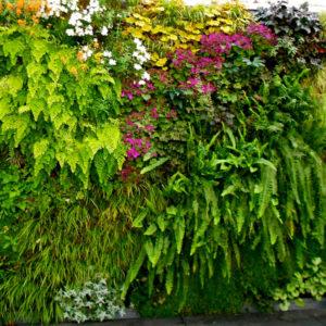 Tips Merawat Taman dengan Mudah menggunakan Jasa Garden Service